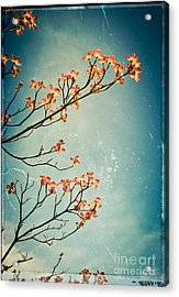 Touch The Sky Acrylic Print by Colleen Kammerer