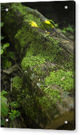 Touched By Nature Acrylic Print by Michael Williams