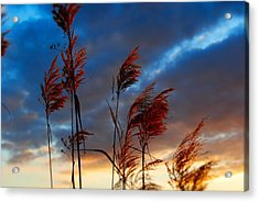 Touched By The Sunset Acrylic Print by Michele Kaiser