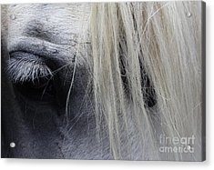 Touched My Heart Acrylic Print by Fiona Kennard