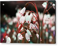Acrylic Print featuring the photograph Touches Of Red by Rafael Quirindongo