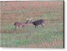 Touching Moment Acrylic Print by Dan Sproul