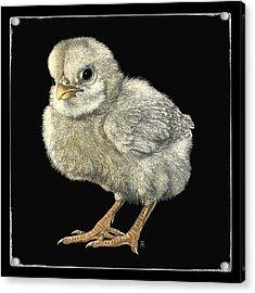 Tough Chick Acrylic Print