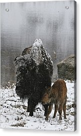 Acrylic Print featuring the photograph Toughing It Out by Gary Hall