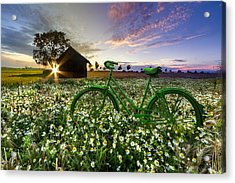 Tour De France Acrylic Print by Debra and Dave Vanderlaan