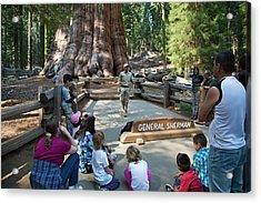 Tourists Visiting General Sherman Tree Acrylic Print