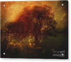 Acrylic Print featuring the photograph Toward A Secret Sky ... by Chris Armytage
