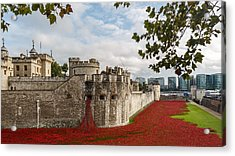 Tower Of London Poppies Acrylic Print by Izzy Standbridge