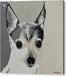 Toy Fox Terrier Acrylic Print by Slade Roberts