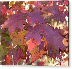 Acrylic Print featuring the photograph Traces Of Fall by Andrea Anderegg