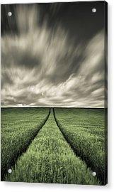 Tracks Acrylic Print by Dave Bowman
