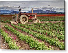 Tractor And Tulips Acrylic Print