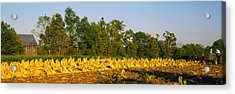 Tractor In A Tobacco Field, Winchester Acrylic Print by Panoramic Images