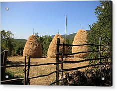 Traditional Agriculture Acrylic Print by Frederic Vigne