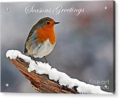 Traditional Christmas Robin Acrylic Print by Paul Scoullar
