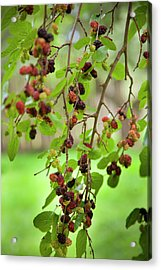 Traditional Foods Such As Berries Acrylic Print