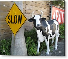 Traffic Cow Acrylic Print