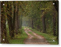 Trail Along The Canal Acrylic Print by Jeannette Hunt