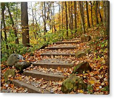 Trail Choice Acrylic Print