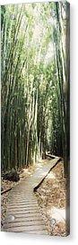 Trail In A Bamboo Forest, Hana Coast Acrylic Print