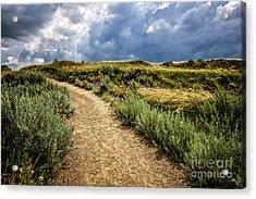 Trail In Badlands In Alberta Canada Acrylic Print by Elena Elisseeva