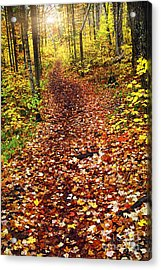 Trail In Fall Forest Acrylic Print by Elena Elisseeva