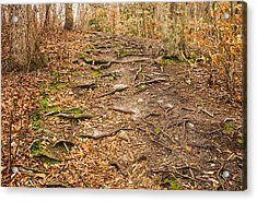Trail In Ryder Conservation Land Acrylic Print by Frank Winters