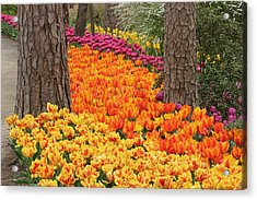 Trail Of Tulips Acrylic Print