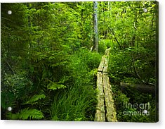 Trail Through The Woods Acrylic Print
