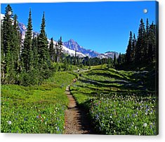 Trail To Mazama Ridge Acrylic Print