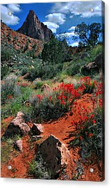 Acrylic Print featuring the photograph Trail To The Watchman by Barbara Manis