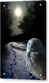 Trail Watch Acrylic Print