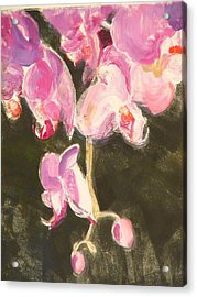 Trailing Phal Acrylic Print by Valerie Lynch