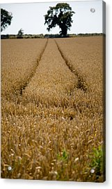 Tramlines Acrylic Print by Paul Lilley