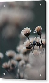 Acrylic Print featuring the photograph Tranquil by Bruce Patrick Smith