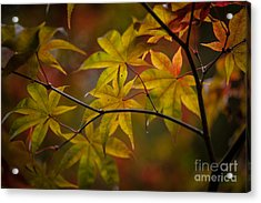 Tranquil Collage Acrylic Print by Mike Reid