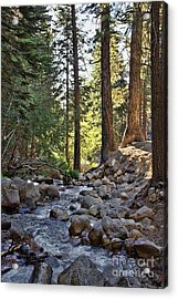 Tranquil Forest Acrylic Print by Peggy Hughes