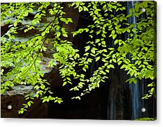 Acrylic Print featuring the  Tranquil by Haren Images- Kriss Haren