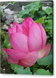 Tranquil Lotus  Acrylic Print