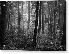 Tranquil Woods Acrylic Print by Eric Dewar