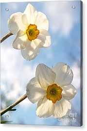 Transcendent Jonquils And Sky Acrylic Print by Anna Lisa Yoder