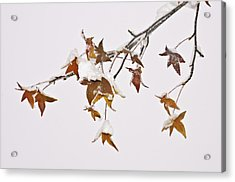 Transition Acrylic Print