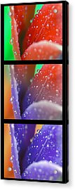 Transitions Acrylic Print by Robert Culver