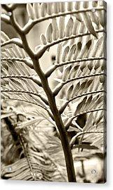 Translucidity Acrylic Print