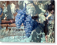 Transparent Grapes Acrylic Print by Rebecca Parker