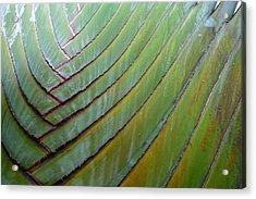Traveler's Palm Design Acrylic Print