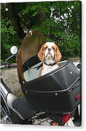 Traveling Dog Acrylic Print