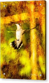 Hummingbird - In Flight - Treading Air Acrylic Print by Barry Jones