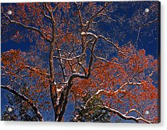 Acrylic Print featuring the photograph Tree Against Dark Sky by Andy Lawless