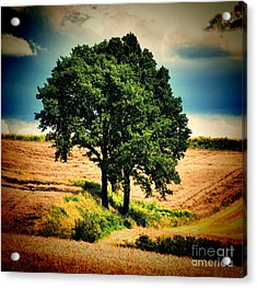 Acrylic Print featuring the photograph Tree Alone by Boon Mee